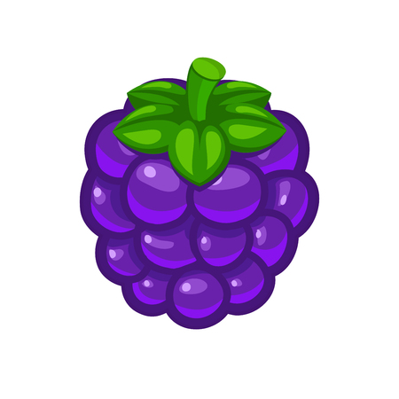 dewberry: Single blackberry berry with green leafs vector icon isolated on white background for food art and illustration Illustration