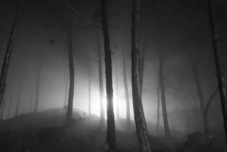 dense forest: Dense forest