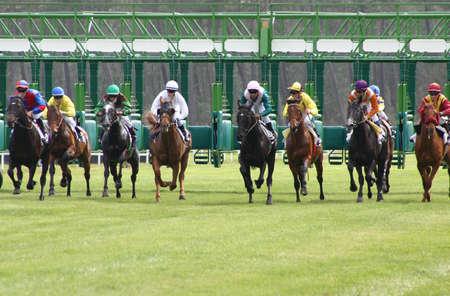 cavallo in corsa: partenza della gara