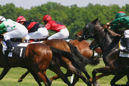equitation: Horse racing Stock Photo