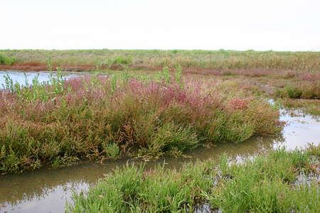 pantanos: pantanos salinos  Foto de archivo