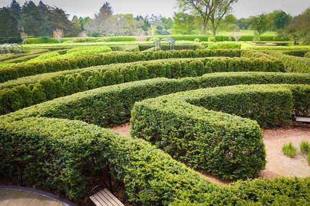 Topiary maze Reklamní fotografie