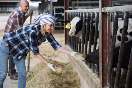 milker: Young Female technician taking care of cows in cows barn Stock Photo