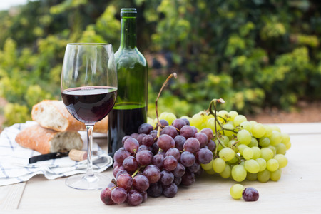 glass of wine and ripe grapes in the vineyard at summer