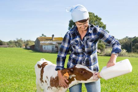 volwassen vrouw feeds twee weken oud kalf uit fles met dummy op gazon