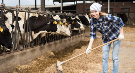 Cheerful cowgirl working with milking herd and smile at cowhouse in farm