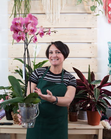 woman florist with orchid phalaenopsis in apron and tool in flower shop