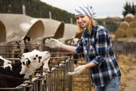Young woman working with milky cows in cowhouse outdoors