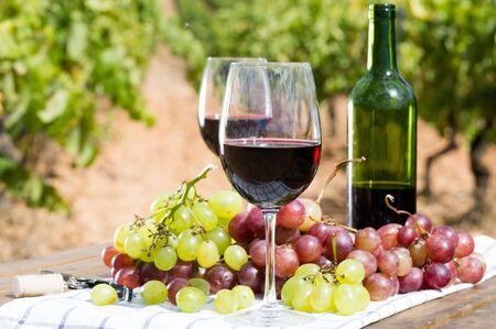 glas rode wijn en rijpe druiven op tafel in de wijngaard Stockfoto
