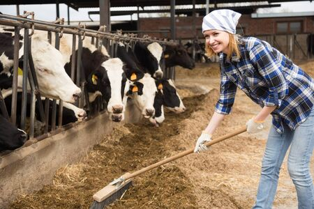 Cheerful woman working with milking herd at cowhouse in farm 写真素材