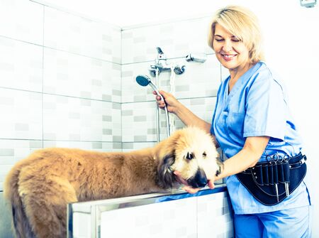 female professional wash puppy in hair salon for animals