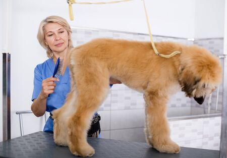 female professional combing puppy in hairdresser