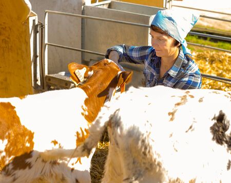 woman taking care of dairy herd in livestock farm