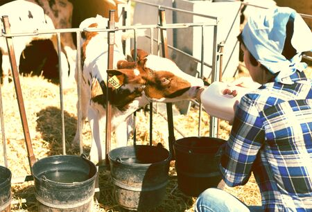 woman feeds two week old calf from bottle with dummy