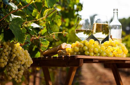 glass of White wine grapes and bread on table in field Imagens