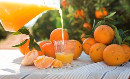 juicy oranges and juice on table in orange garden