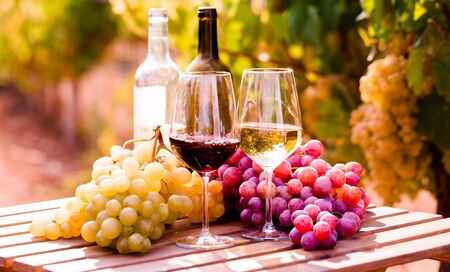 glasses of red and white wine and ripe grapes on table in vineyard at sun day