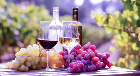 glasses of red and white wine and ripe grapes on table in vineyard at sun day Stok Fotoğraf
