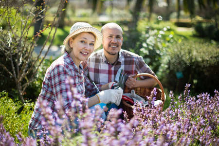 mature Family work in the garden. Woman and man grow roses