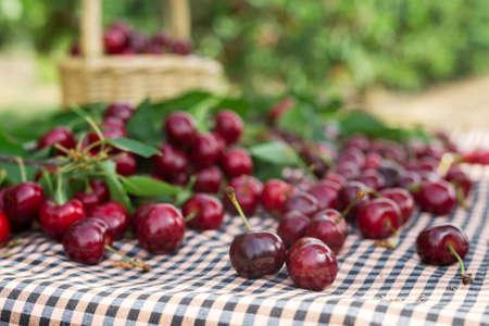berries ripe juicy cherries on the table