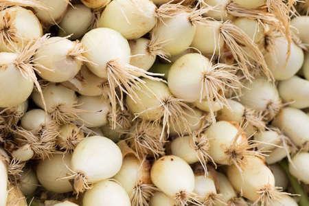 freshly washed farm heads of onions
