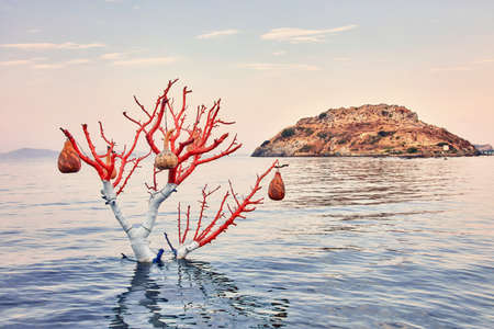 Decorative handmade calabash gourd (water pumpkin) lamps hanging on a tree in the sea at sunrise and rabbit island in Gumusluk, Bodrum, Turkey
