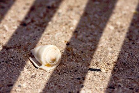 a seashell on the sand under diagonal shades