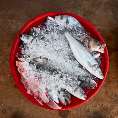 Top down view of daily fresh sea fish on ice in a red basin on a soil ground