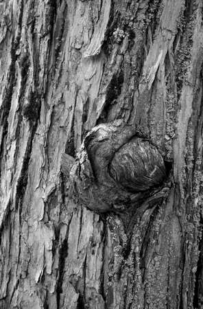 cancerous: Tree Cancerous Growth - Black and white