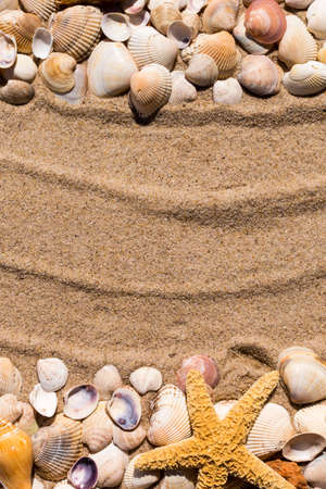 sea star: Background: sea star and shells on the sand of the sea