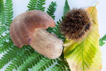boletus mushroom: boletus mushroom with sprout on a white background