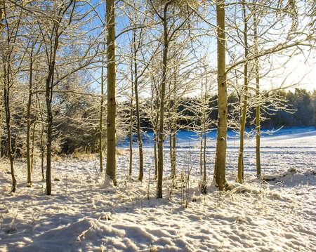 Forest winter snow, Wilderness