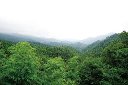 green environment: Green environment  Stock Photo