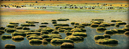 animal husbandry: Wetlands