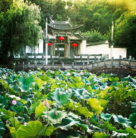 bourgeoisie: Lotus pond