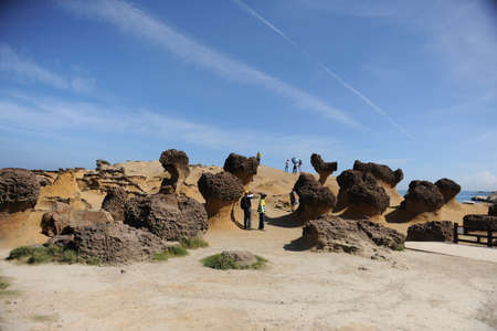 sauce: sauce salvaje, parque geológico