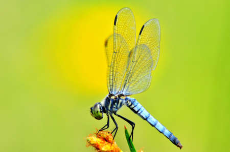 Dragonfly, Stock Photo - 10213788