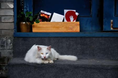 moggy: cat