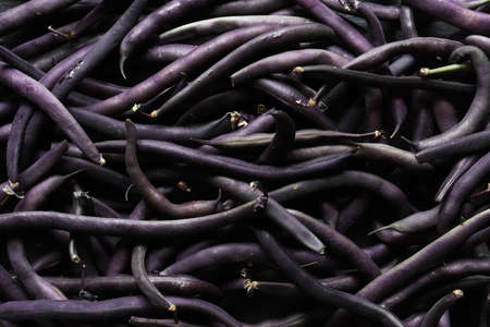Photography of purple french bean / Purple french bean also named string bean is a purple podded variety which will turn completely green during cooking. Fleshy bean that can reach a length of 15 cm