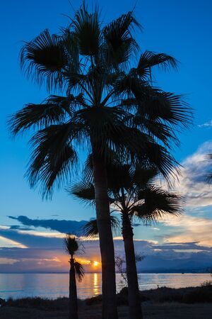 silhoutted: Palm trees silhoutted against the setting sun on a beach on the Costa del Sol, Spain Stock Photo