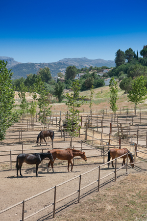 Horse Stables, Ronda, Andalusia, Spain with horses grazing within fenced areas