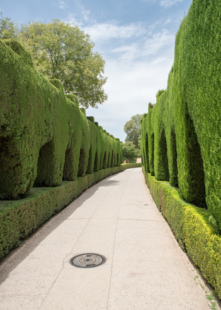 Green Cippress lined walkway at the Alhambra Palace and fortress located in, Granada, Andalusia, Spain.