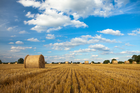 Freshly made straw bales against a blue sky with white fluffy clouds Zdjęcie Seryjne