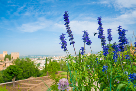 Blue flowers with a black bee hovering and defocussed view towards Granada with mountains in the background at the Alhambra Palace and fortress located in, Granada, Andalusia, Spain.