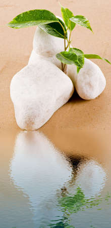 Ficus between white stones in water reflection Stock Photo - 8095127