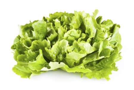vibrat: Fresh green lettuce isolated over white background Stock Photo