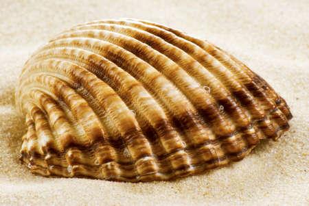 Close-up sea shell on the beach photo