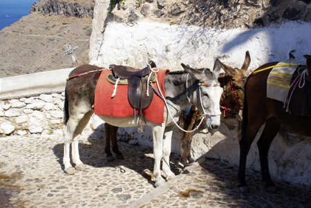 Donkeys on the island of Santorini, Greece photo