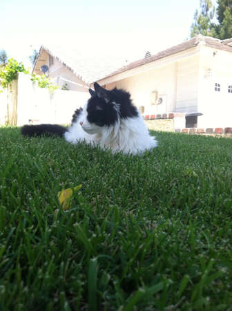 My cat enjoying the front yard on her last few days alive.