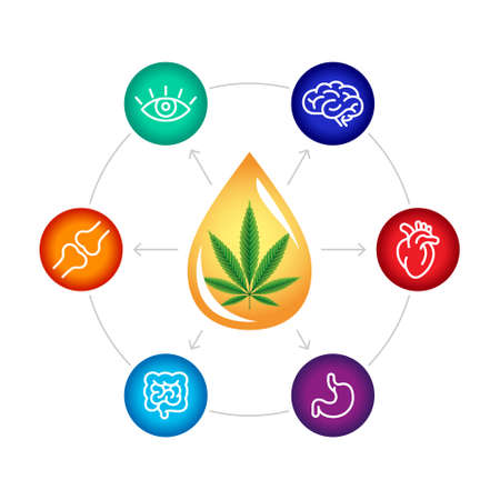 CBD oil benefits, medical uses for cbd oil, brain , heart, stomach, intestines, articulations, eyes